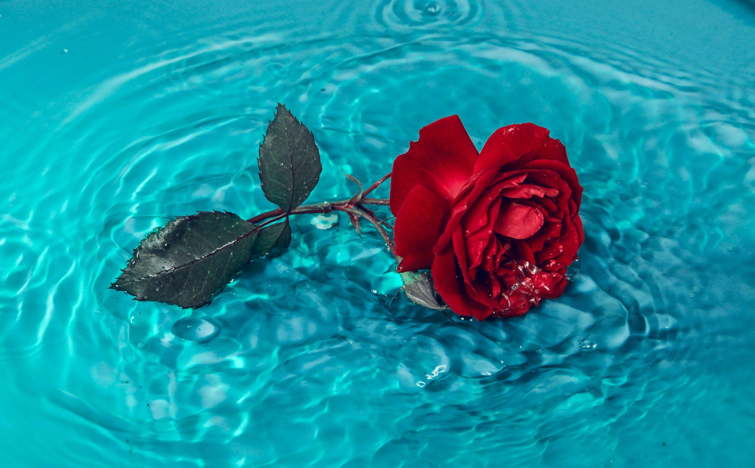 agua-rosa